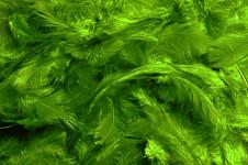 Peříčka barevná - sytě zelená