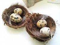 Hnízdečko velké s vajíčky křepelčími