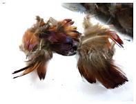 Peříčka drobná - ptačí - mix