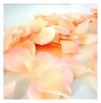 Plátky růží - lososové