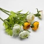 Rannunculus zápich - 2 květy - bílý