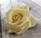 Hlavičky poupat růží - krémové  mini