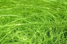 Sisal - sv.zelený