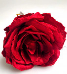 Růže rozvitá stvol  2 květy s poupětem - červená