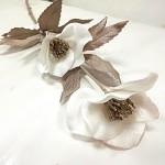 Čemeřice zimní - bílá perleťová