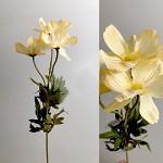 Cosmos zápich - 3 květy - krémový