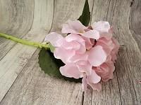 Hortenzie stvol - narůžovělá