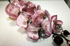 Orchidej větev zimní - sv.růžová