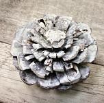 Šišková růže borovice bělená - malá 1ks