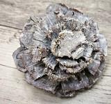 Šišková růže borovice bělená - velká 1ks