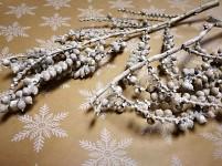 Canella větvička - zimní - bílá