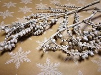 Canella větvička - bílá - 1ks