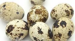 Vajíčko křepelčí - 12ks