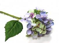 Hortenzie stvol mini - fialovo-zelená