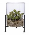 Sukulent ve skleněném květináči na stojánku - 15 cm