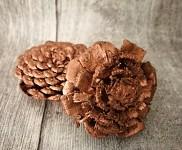 Šišková růže měděná -  1ks