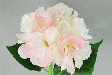 Hortenzie - stvol krémovorůžová