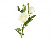 Růže rozvité s poupaty - ivory