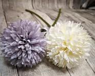 Allium - bílý květ