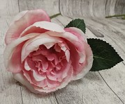 Růže - stvol - vintage růžová - 25 cm