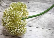 Allium maxi - sv.zelené