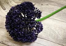Allium maxi - tm.fialové