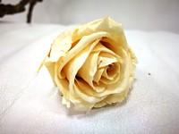 Stabilizované poupě růže - krémové