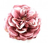Hlavička čajové růže 10 cm - starorůžová