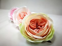 Hlavička pivoňkové růže - krémovorůžová