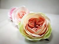Hlavička pivoňkové růže - krémovo-lososová