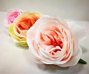 Hlavička pivoňkové růže - narůžovělá
