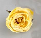 Hlavička pivoňkové růže - žlutá