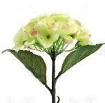 Hortenzie stvol mini - krémovo-zelená - 32 cm