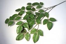 Větev - bukové listy - 60 cm