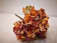 Hortenzie podzimní - meruňková