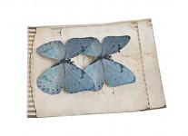 Motýlci - 2 ks - zelenomodrá