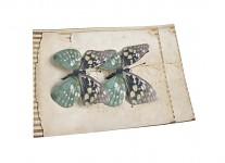 Motýlci - 2 ks - zelená