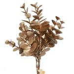 Eukalyptus - stvol hnědý