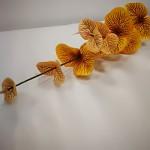 Eukalyptus - stvol oranžový