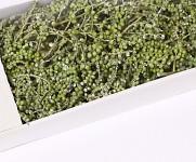 Canella větvička - zimní - zelená
