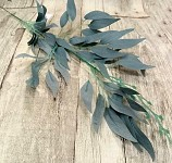 Ruscus barevný - šedozelený - 60 cm