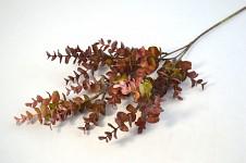 Eukalyptus - vínový