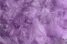 Peříčka barevná - fialová