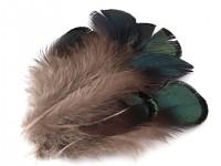 Bažantí peří - mini - hnědozelené - 5 ks