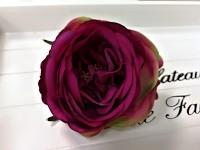 Hlavička pivoňkové růže - fuchsia