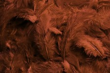 Peříčka barevná - hnědá