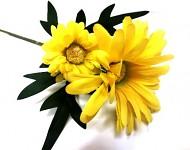Kopretina stvol  - 2 květy -  žlutá