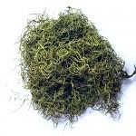 Tilancia přírodní 50 g - zelená