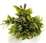 Ruscus zelený mini zápich - 8 ks