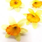 Květ narcisu 4 cm - krémovožlutý - 1 ks
